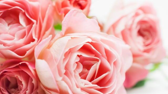 彼の世からの薔薇のメッセージ
