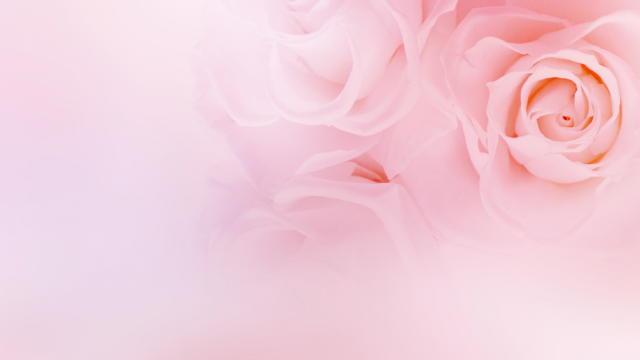 愛に傷付いた時に ~The Rose~