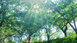 引き上げ合う・愛と成幸と豊かさ(5)
